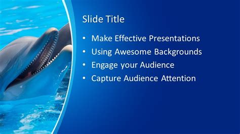 Free Dolphin PowerPoint Template - Free PowerPoint Templates